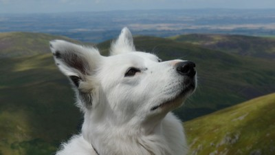 Fen and the cheviot hills