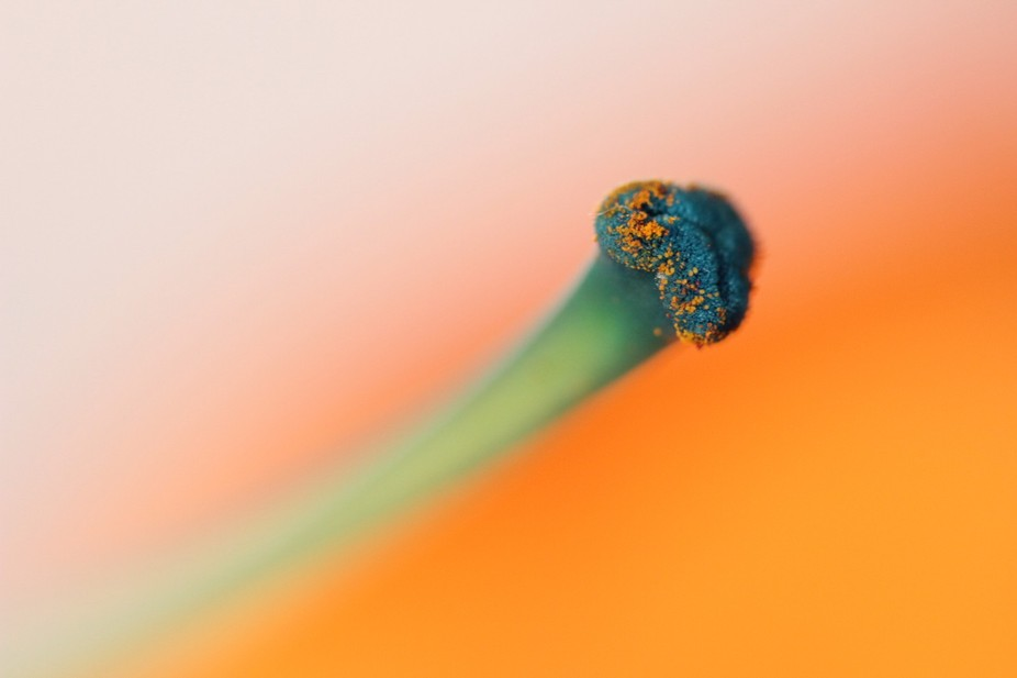 The great thing about abstract macro is that great images literally appear in front of your eyes.