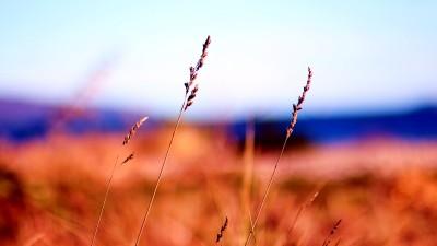 Petone Beach, Lower Hutt