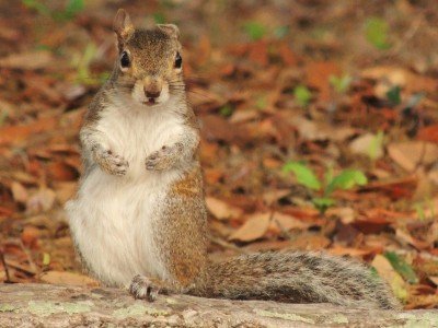 Hey You!  you got any nuts!!