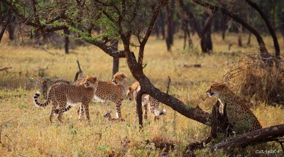 The law of the Serengeti