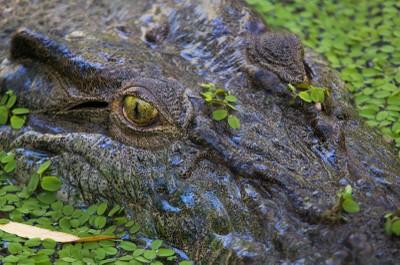 Croc - up real close