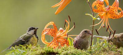 lily-gathering