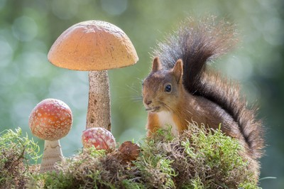 mushrooms-bright