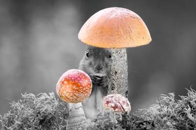 mushroom-wish