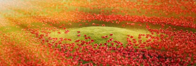100 Years Remembrance by Netrovia - Best Shot Photo Contest