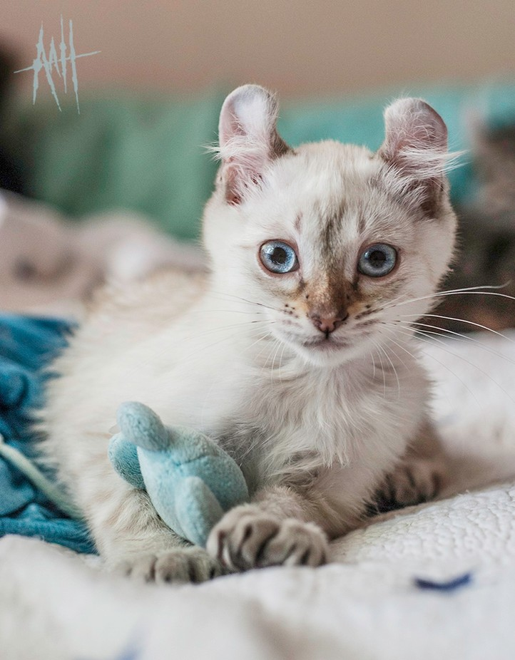 CuteCoconut by AshleyAnnImages - Cute Kittens Photo Contest
