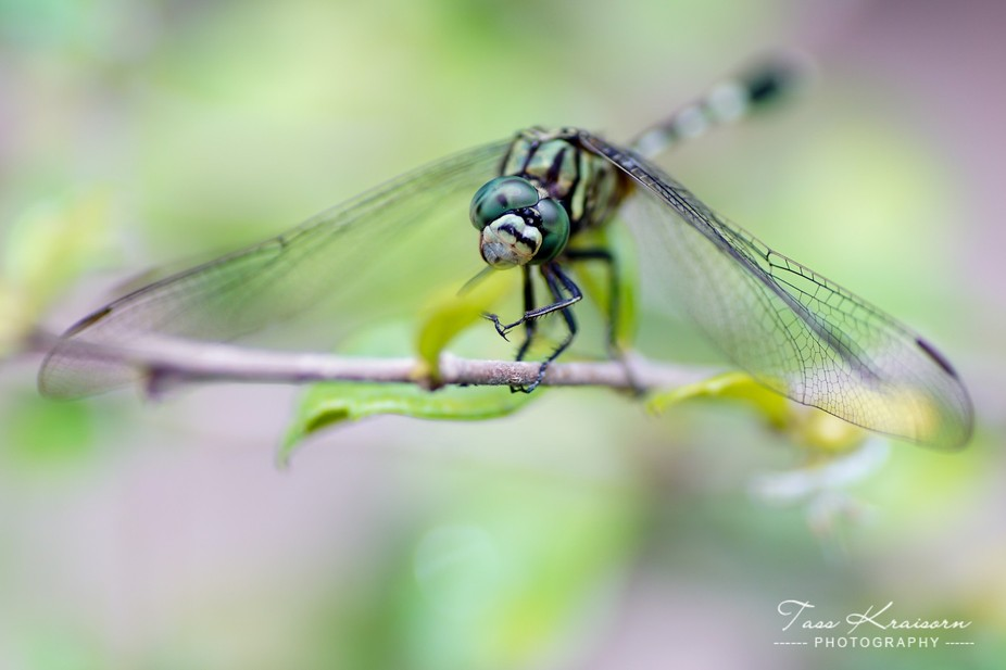I loved the way he tilted his head and lifted his little arm while taking the shot as if posing!