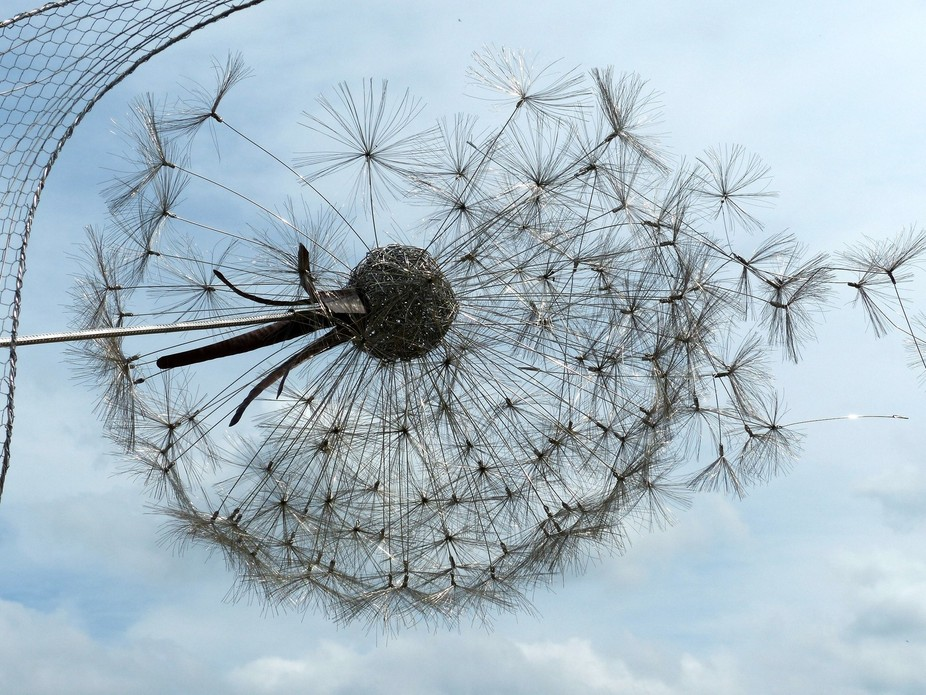 close up of the dandelion