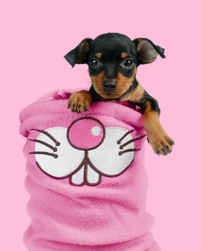 pup on pink