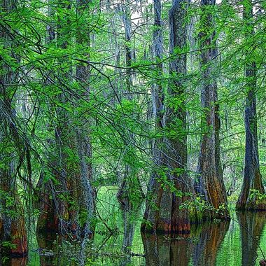 Deep in the swamps of Louisiana a magical light to a magical place