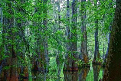 Cajun Fairy Swamp