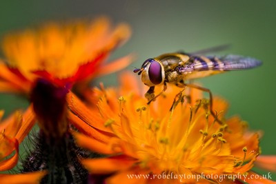 Flies and Bees Photo Contest Winners