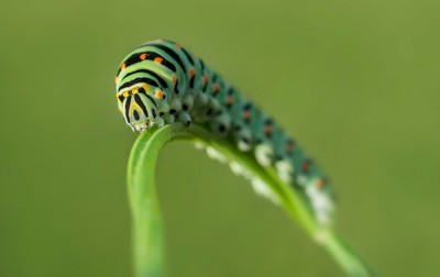 Caterpillar Rollercoaster