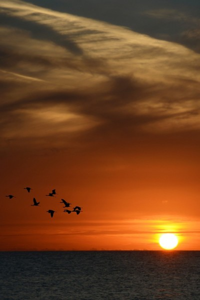 SunSet Migration from Punta Secca