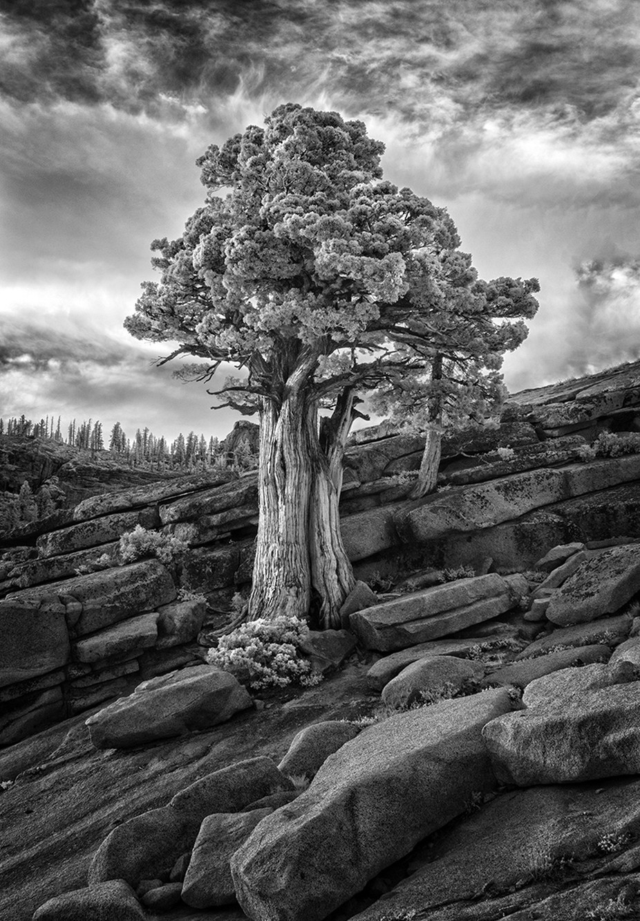 Mighty Tree by fidfoto - Depth In Black And White Photo Contest