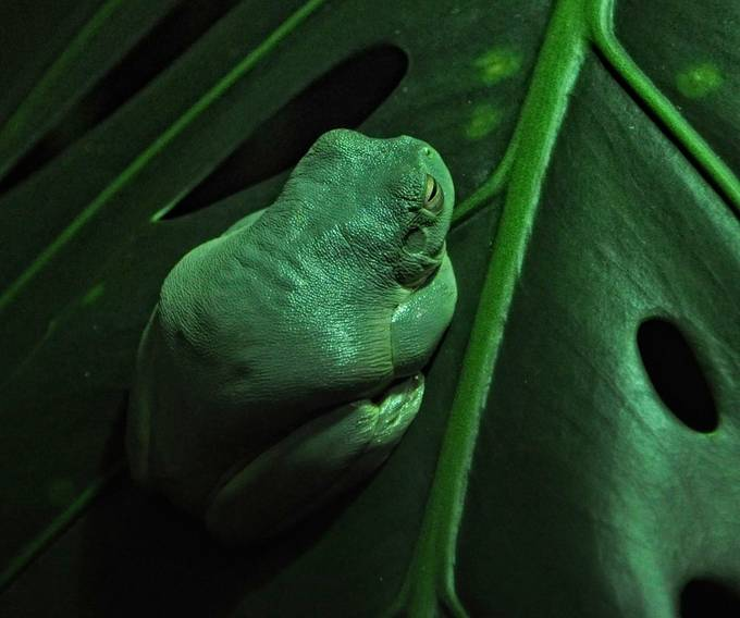 Son Of Jabba by signathus - Dodho Volume 4 Photo Contest