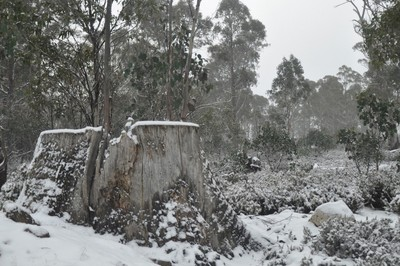 Winter in Tasmania2