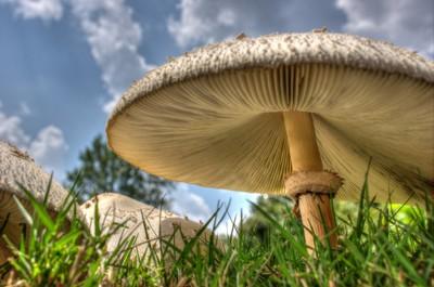 Towering mushrooms by Theo-Herbots-Fotograaf