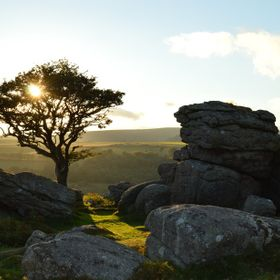 Just as the sun was setting behind the tree. On Dartmoor. early evening
