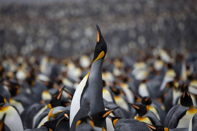 South Georgia Island - Southern Ocean - Antarctica by CorinJamesPhotography