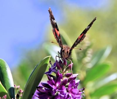 happy butterfly quiet
