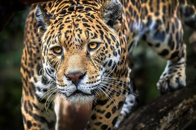 Animal Are Beautiful Photo Contest Winner