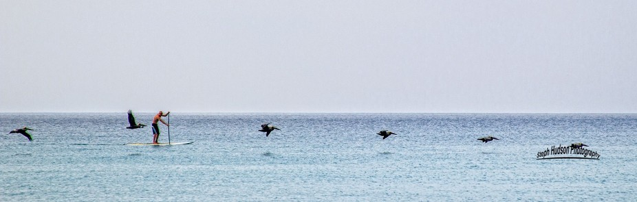 Late Spring this year my neighbor was out paddleboarding and was surrounded by dolphins and I wan...