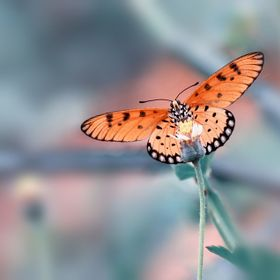 A butterfly collecting nectar.