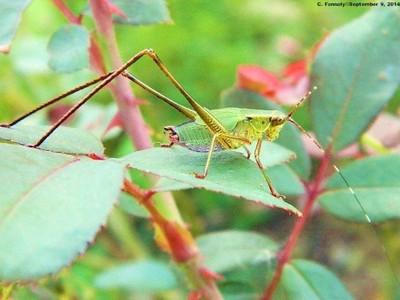 Leaf Eater