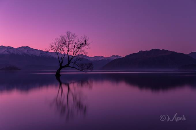 The Company Tree by Mike_MacKinven
