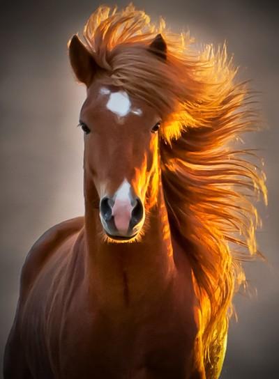 Fabio Horse