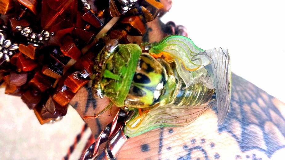 Cicada freshly molted