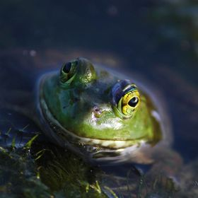 Frogs fascinate me. This one just seemed to be waiting to have his picture taken. Sitting and smiling.