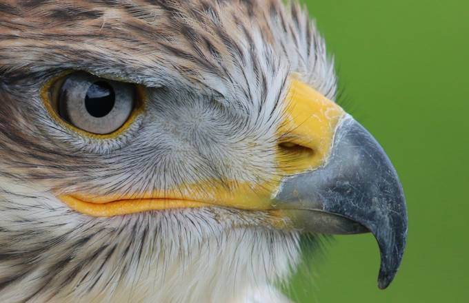 The Eye of the Buzzard by Rustybucket8472 - Monthly Pro Vol 10 Photo Contest