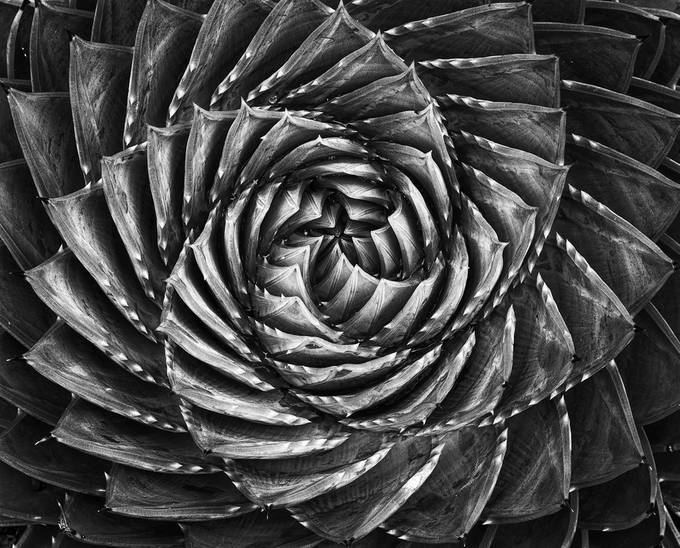 Spiral by fidfoto - Shapes and Lines Photo Contest
