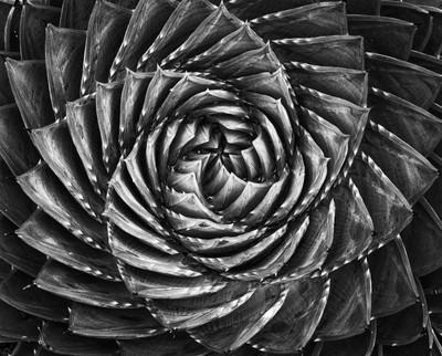 Geometry in B&W Photo Contest Finalists!