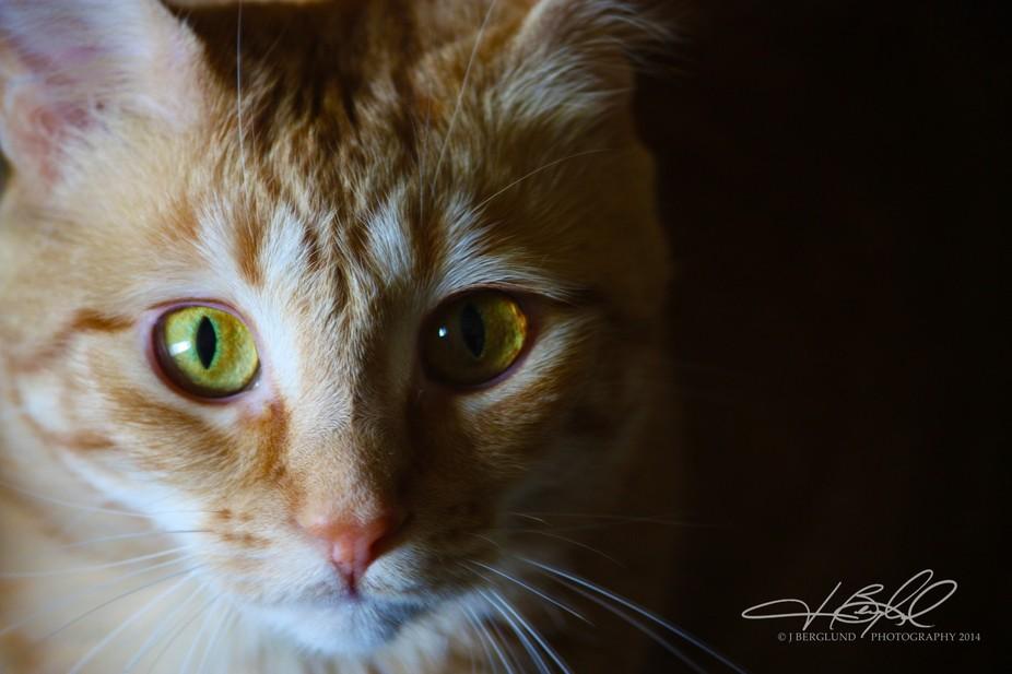 Ginger Face 1