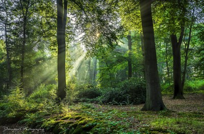 Backlight in the forest