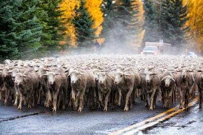 Idaho Traffic Jam