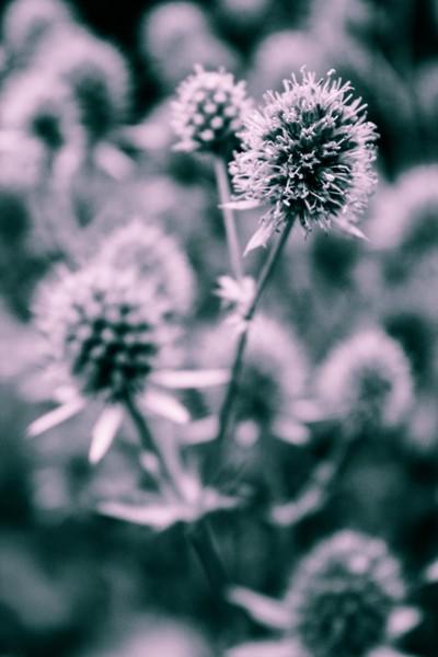 Duo Tone Flower