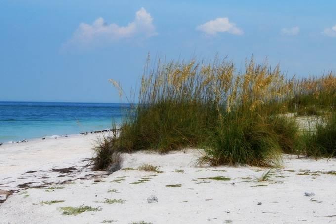 Egmont key sea grasses