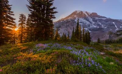 Mt Rainier National Park. (Paradise at Sunset)