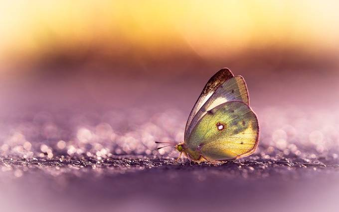 Butterfly by Cbries - Subjects On The Ground Photo Contest