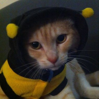 billy bee 1