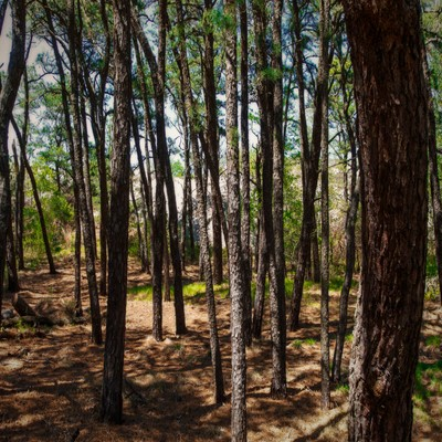 pine grove 2