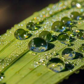 Water drops on a Gladioli leaf