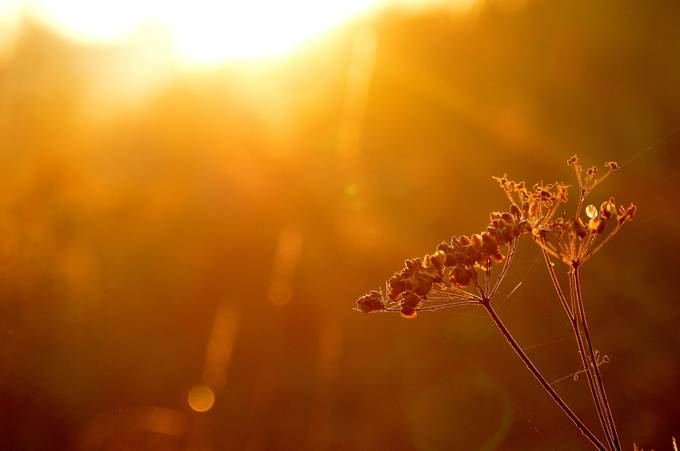 Golden Glow by MissSandy - Magical Light Photo Contest