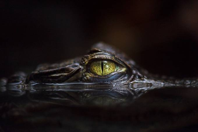 Hypnotic by gaetanocessati - Reptiles And Amphibians Photo Contest