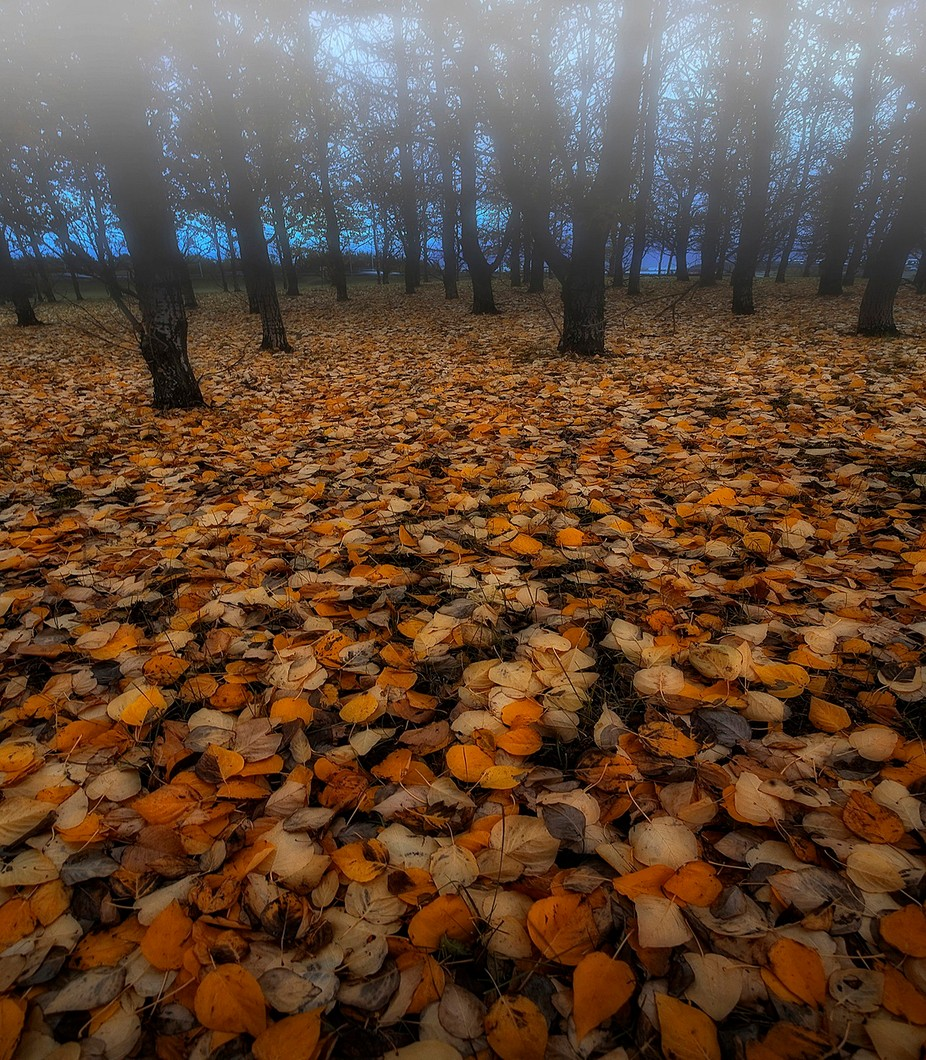 Leaves by Structor - Fall 2017 Photo Contest